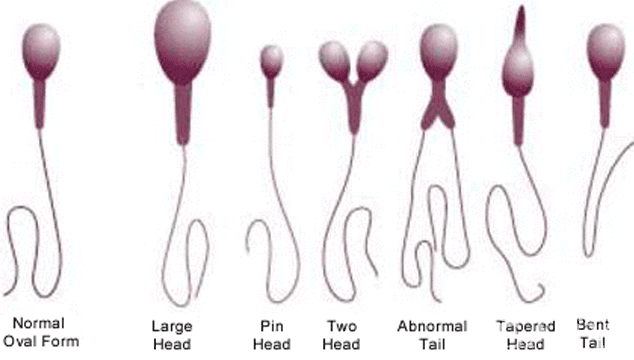 does-a-semen-analysis-compare-to-female-fertility-tests-2