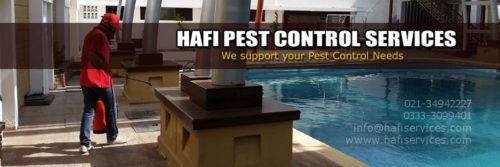 roaches-and-other-crawling-ants-dengue-mosquitoes-control-prevention-of-similar-insect-rats-control